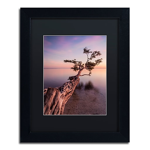 "Trademark Fine Art ''Water Tree IV'' by Moises Levy 11"" x 14"" Black Matted Black Frame (886511870994)"