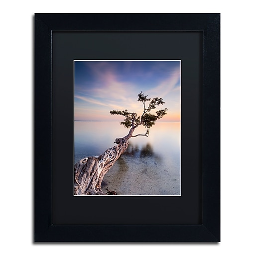 "Trademark Fine Art ''Water Tree X'' by Moises Levy 11"" x 14"" Black Matted Black Frame (886511877559)"