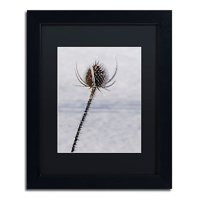 "Trademark Fine Art ''Dead of Winter Detail'' by Kurt Shaffer 11"" x 14"" Black Matted Black Frame (886511821347)"
