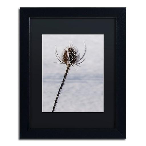 "Trademark Fine Art ''Dead of Winter Detail'' by Kurt Shaffer 11"" x 14"" Black Matted Black Frame (886511821347)"