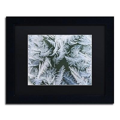 Trademark Fine Art ''Frost at Zero Degrees'' by Kurt Shaffer 11
