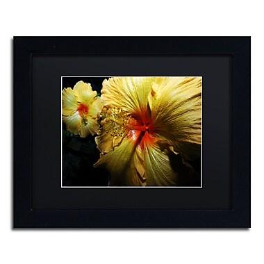 Trademark Fine Art ''Sunburst Hibiscus'' by Kurt Shaffer 11