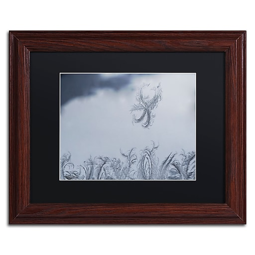 "Trademark Fine Art ''Frost Fairy on a Window'' by Kurt Shaffer 11"" x 14"" Black Matted Wood Frame (886511822689)"