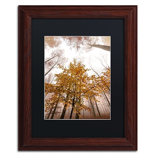 """Trademark Fine Art ''Foggy Days'' by Philippe Sainte-Laudy 11"""" x 14"""" Black Matted Wood Frame (886511796744)"""