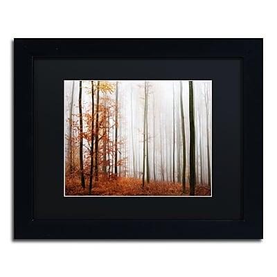 Trademark Fine Art ''Forest Corner'' by Philippe Sainte-Laudy 11