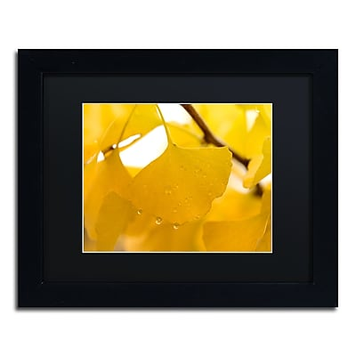 Trademark Fine Art ''Ginkgo Drops'' by Philippe Sainte-Laudy 11