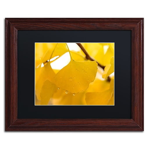 """Trademark Fine Art ''Ginkgo Drops'' by Philippe Sainte-Laudy 11"""" x 14"""" Black Matted Wood Frame (886511796942)"""