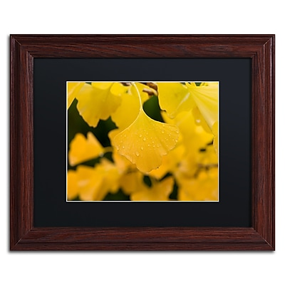 Trademark Fine Art ''Ginkgo in the Rain'' by Philippe Sainte-Laudy 11