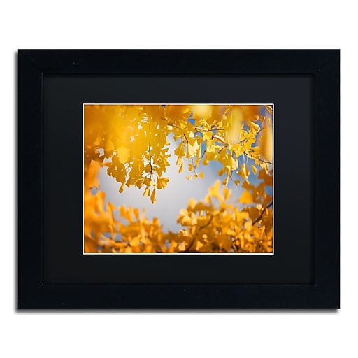 "Trademark Fine Art ''Ginkgophytes'' by Philippe Sainte-Laudy 11"" x 14"" Black Matted Black Frame (886511797260)"