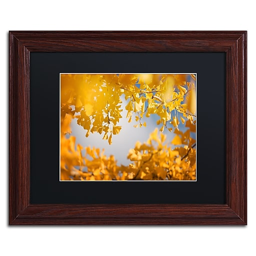"""Trademark Fine Art ''Ginkgophytes'' by Philippe Sainte-Laudy 11"""" x 14"""" Black Matted Wood Frame (886511797345)"""