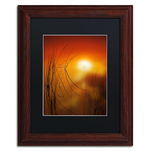 """Trademark Fine Art ''Nature Time Machine'' by Philippe Sainte-Laudy 11"""" x 14"""" Black Matted Wood Frame (886511797949)"""