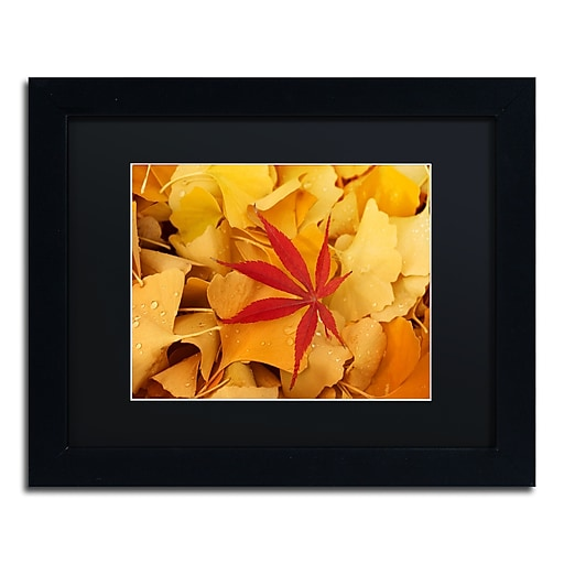 """Trademark Fine Art ''Red Star'' by Philippe Sainte-Laudy 11"""" x 14"""" Black Matted Black Frame (886511798366)"""