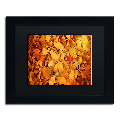 """Trademark Fine Art ''Variegated'' by Philippe Sainte-Laudy 11"""" x 14"""" Black Matted Black Frame (886511799769)"""