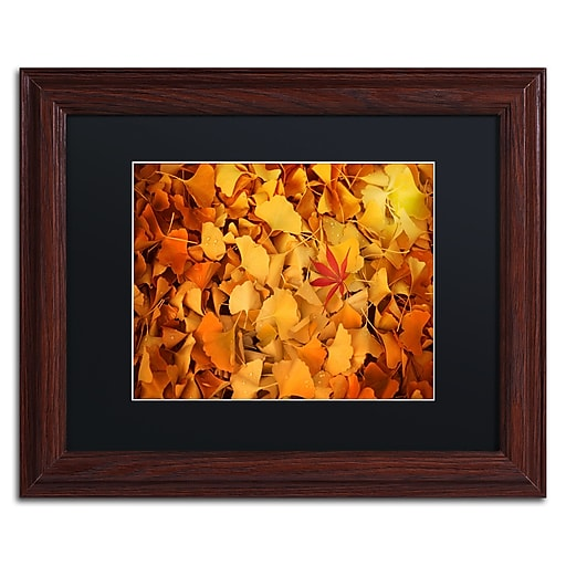 """Trademark Fine Art ''Variegated'' by Philippe Sainte-Laudy 11"""" x 14"""" Black Matted Wood Frame (886511799844)"""