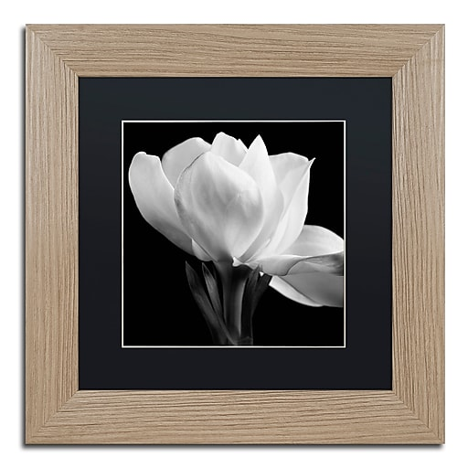 "Trademark Fine Art ''Gardenia'' by Michael Harrison 11"" x 11"" Black Matted Wood Frame (886511838468)"