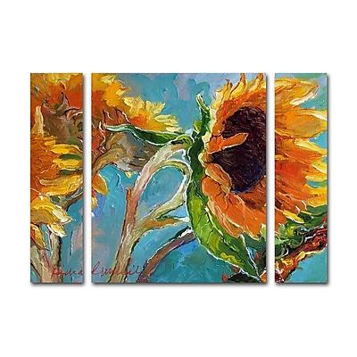 Trademark Fine Art ''Sun 11'' by Richard Wallich 30