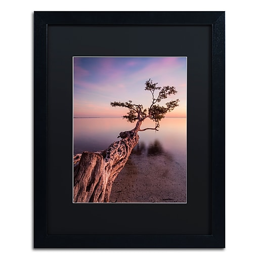 """Trademark Fine Art ''Water Tree IV'' by Moises Levy 16"""" x 20"""" Black Matted Black Frame (886511871014)"""