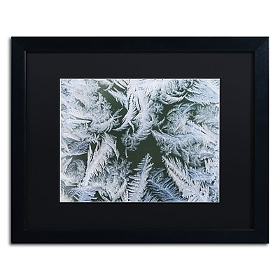 Trademark Fine Art ''Frost at Zero Degrees'' by Kurt Shaffer 16
