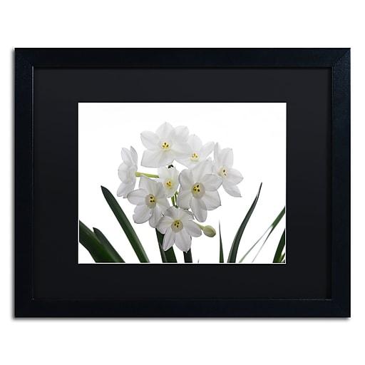 "Trademark Fine Art ''Paper White Bouquet'' by Kurt Shaffer 16"" x 20"" Black Matted Black Frame (886511821767)"