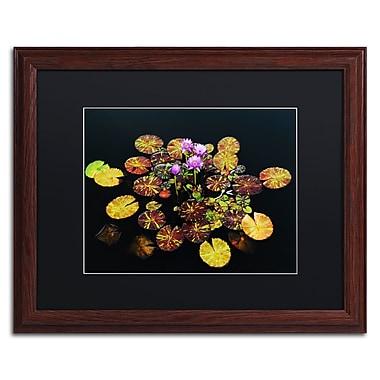 Trademark Fine Art ''Exotic Lilies'' by Kurt Shaffer 16