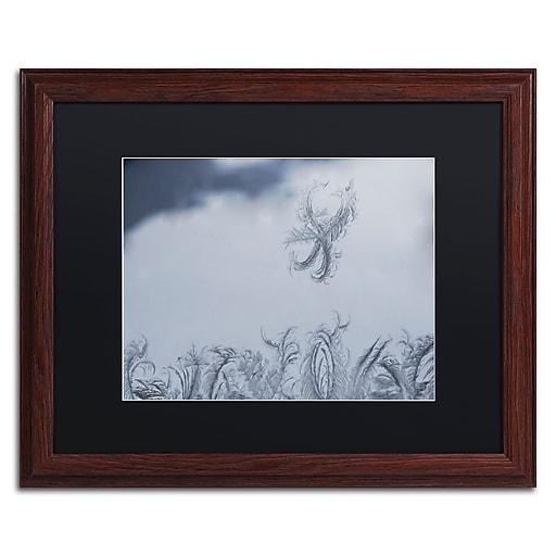 "Trademark Fine Art ''Frost Fairy on a Window'' by Kurt Shaffer 16"" x 20"" Black Matted Wood Frame (886511822696)"