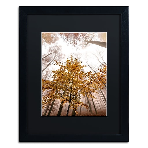 "Trademark Fine Art ''Foggy Days'' by Philippe Sainte-Laudy 16"" x 20"" Black Matted Black Frame (886511796683)"