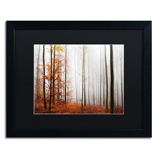 "Trademark Fine Art ''Forest Corner'' by Philippe Sainte-Laudy 16"" x 20"" Black Matted Black Frame (886511796782)"