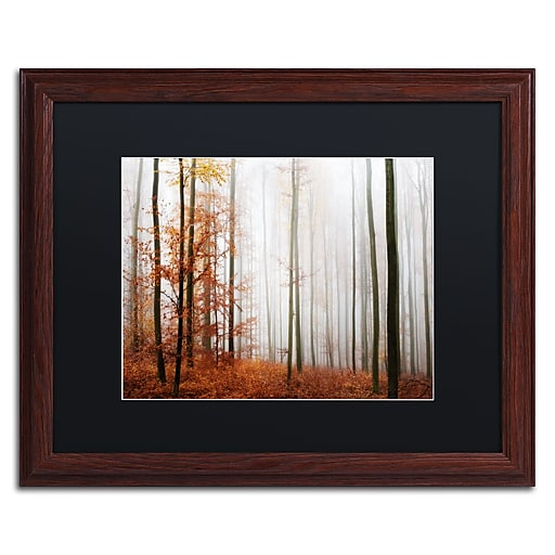 "Trademark Fine Art ''Forest Corner'' by Philippe Sainte-Laudy 16"" x 20"" Black Matted Wood Frame (886511796850)"