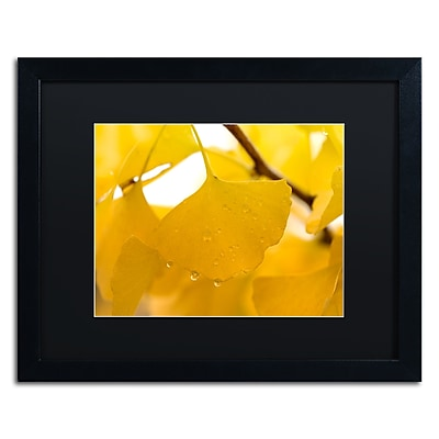 Trademark Fine Art ''Ginkgo Drops'' by Philippe Sainte-Laudy 16