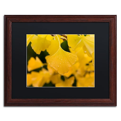 "Trademark Fine Art ''Ginkgo in the Rain'' by Philippe Sainte-Laudy 16"" x 20"" Black Matted Wood Frame (886511797055)"