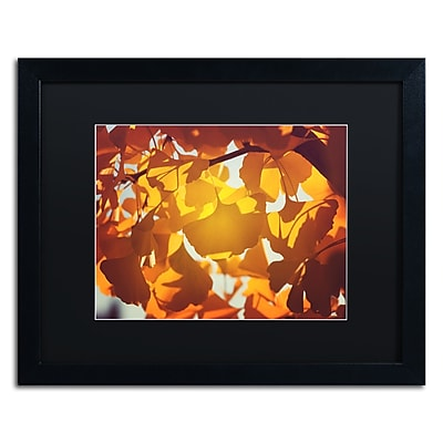 "Trademark Fine Art ''Ginkgo Leaves'' by Philippe Sainte-Laudy 16"" x 20"" Black Matted Black Frame (886511797185)"