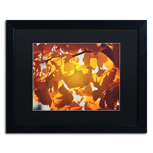 """Trademark Fine Art ''Ginkgo Leaves'' by Philippe Sainte-Laudy 16"""" x 20"""" Black Matted Black Frame (886511797185)"""