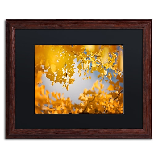 """Trademark Fine Art ''Ginkgophytes'' by Philippe Sainte-Laudy 16"""" x 20"""" Black Matted Wood Frame (886511797352)"""