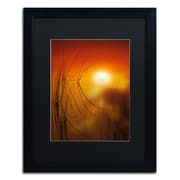 "Trademark Fine Art ''Nature Time Machine'' by Philippe Sainte-Laudy 16"" x 20"" Black Matted Black Frame (886511797888)"