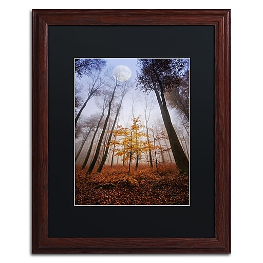 """Trademark Fine Art ''Sentinel'' by Philippe Sainte-Laudy 16"""" x 20"""" Black Matted Wood Frame (886511798854)"""