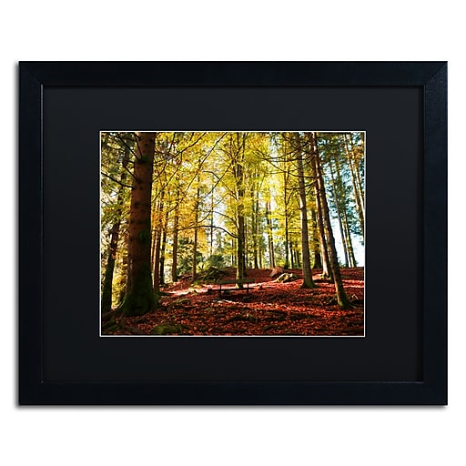 """Trademark Fine Art ''The Autumn Bench'' by Philippe Sainte-Laudy 16"""" x 20"""" Black Matted Black Frame (886511798984)"""