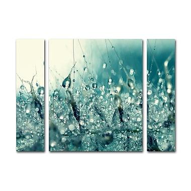Trademark Fine Art ''Under the Sea'' by Beata Czyzowska Young 30