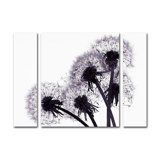 "Trademark Fine Art ''Bunch of Wishes'' by Beata Czyzowska Young 30"" x 41"" Multi Panel Art Set Large (886511916418)"