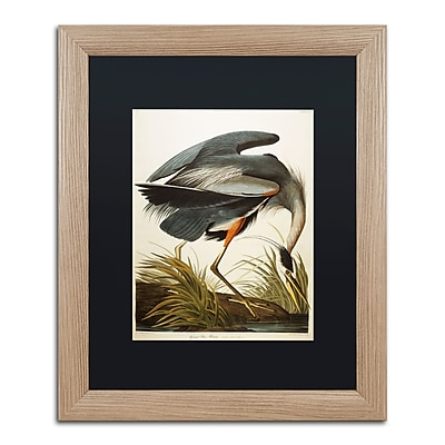 Trademark Fine Art ''Great Blue Heron'' by John James Audubon 16