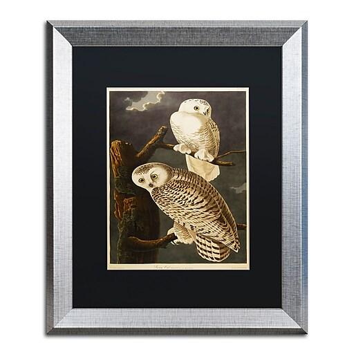 "Trademark Fine Art ''Snowy Owl'' by John James Audubon 16"" x 20"" Black Matted Silver Frame (886511840867)"