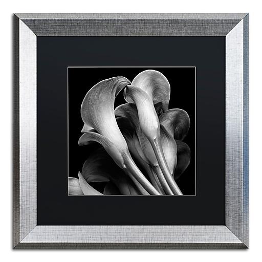 "Trademark Fine Art ''Lillies'' by Michael Harrison 16"" x 16"" Black Matted Silver Frame (886511838529)"