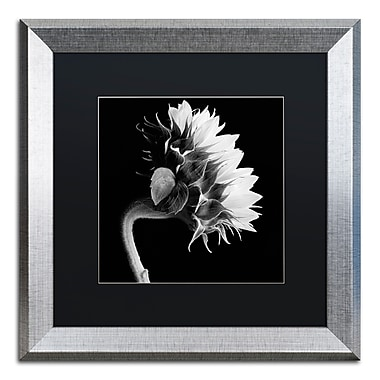 Trademark Fine Art ''Sunflower'' by Michael Harrison 16