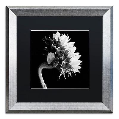 Trademark Fine Art ''Sunflower'' by Michael Harrison 16