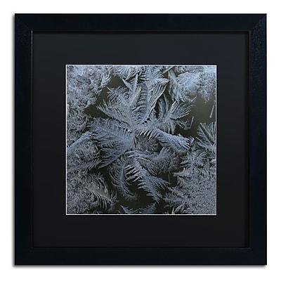 Trademark Fine Art ''Frost Star'' by Kurt Shaffer 16