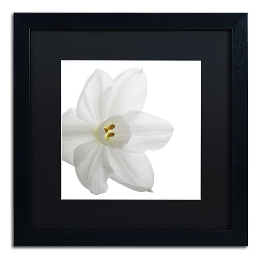 "Trademark Fine Art ''Paper White'' by Kurt Shaffer 16"" x 16"" Black Matted Black Frame (886511821828)"