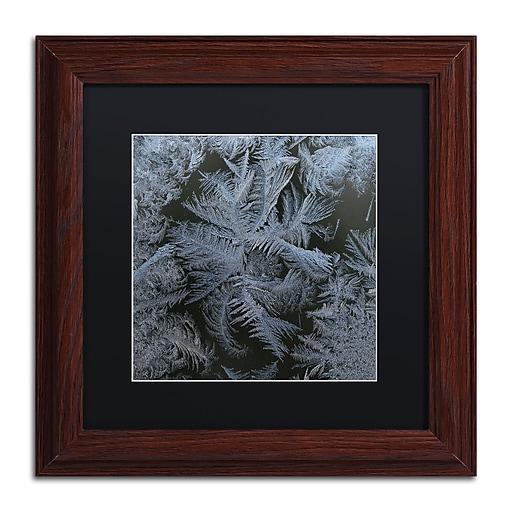 """Trademark Fine Art ''Frost Star'' by Kurt Shaffer 11"""" x 11"""" Black Matted Wood Frame (886511821620)"""