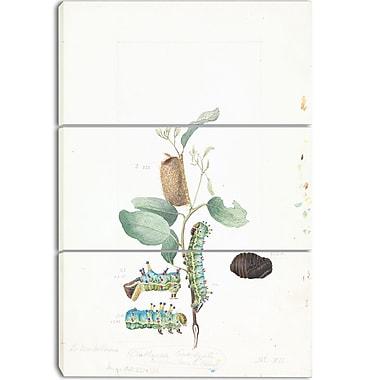 Designart Arthur BartholomewEmperor Gum Moth Canvas Art Print, 3 Panels, (PT4156-3P)