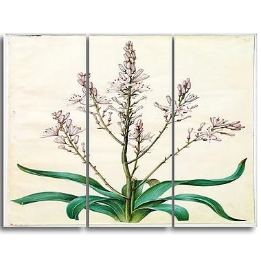 Designart – Imprimé sur toile, Asphodelus ramosus, Johannes Simon Holtzbecher, 3 panneaux (PT4627-3P)