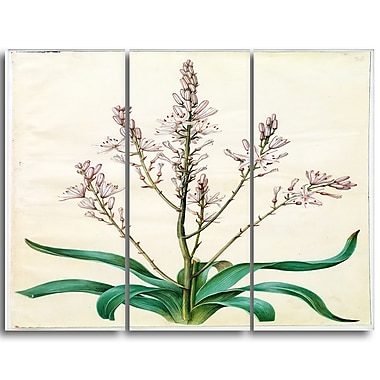 Designart Johannes Simon Holtzbecher, Asphodelus ramosus Canvas Art Print, 3 Panels, (PT4627-3P)