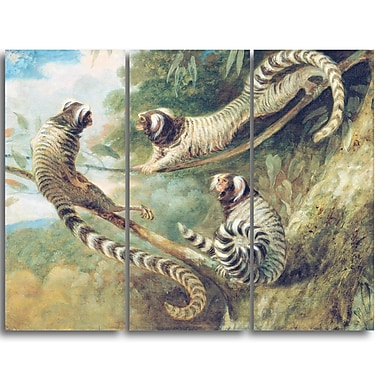 Designart George Garrard, A Marmoset in Three Attitudes Landscape Canvas Art Print, (PT4413-3P)